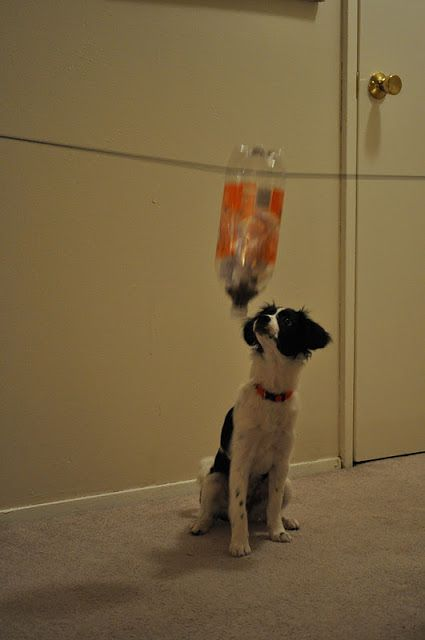 Diy Swinging Pet Treat Dispenser With A Plastic Bottle