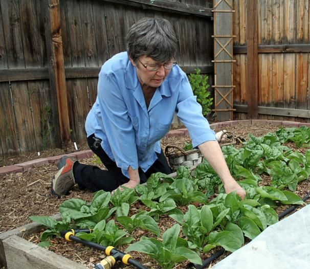 Kitchen Garden Ideas Pinterest: The Benefits Of Raised Beds