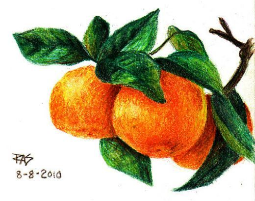 How To Draw Tangerines With Colored Pencils Crayon Drawings