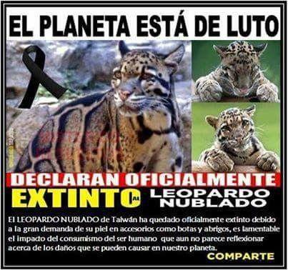 Hermoso animal, hagamos algo contra los depredadores, no sabemos quien sera el siguiente!!