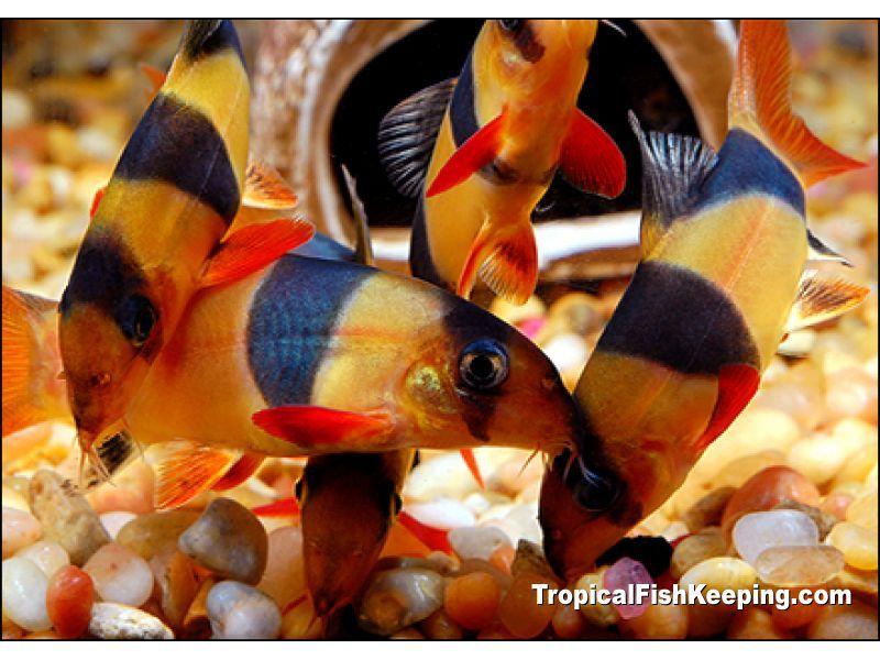 Pin On Fish In My 40 Aquariums