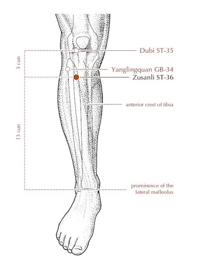 Leg acupuncture points / Mma world series