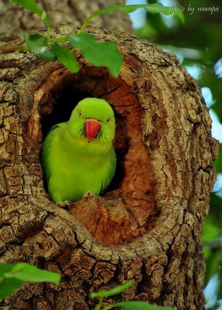 papagaio no oco da árvore