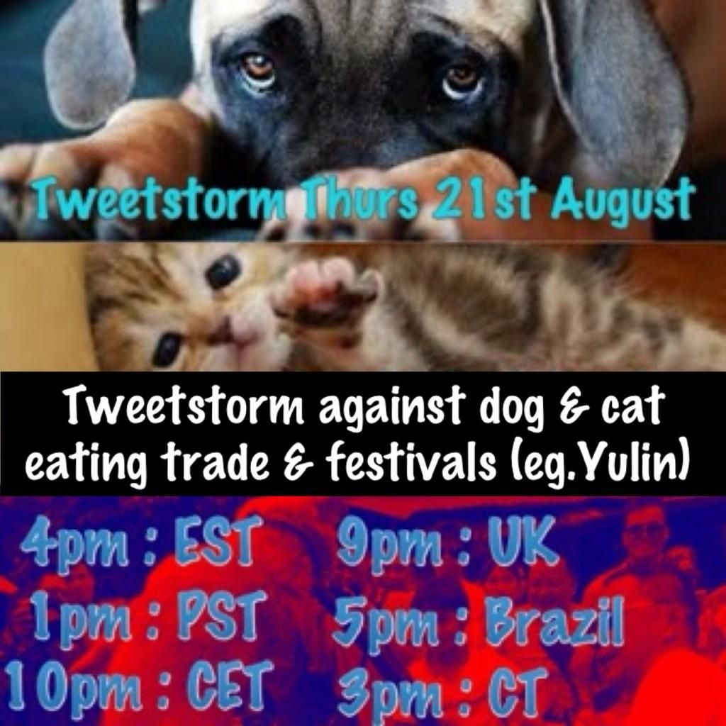 4Pm Cet To Pst cats on | dogs, animals, cats
