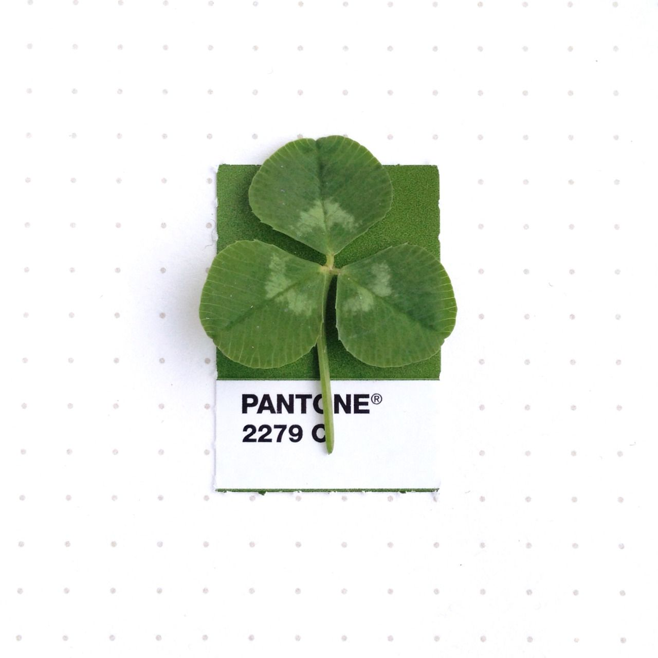 pantone 2279 color match a clover leaf they are growing rampantly right now - Clover Color
