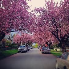 Image result for vancouver spring