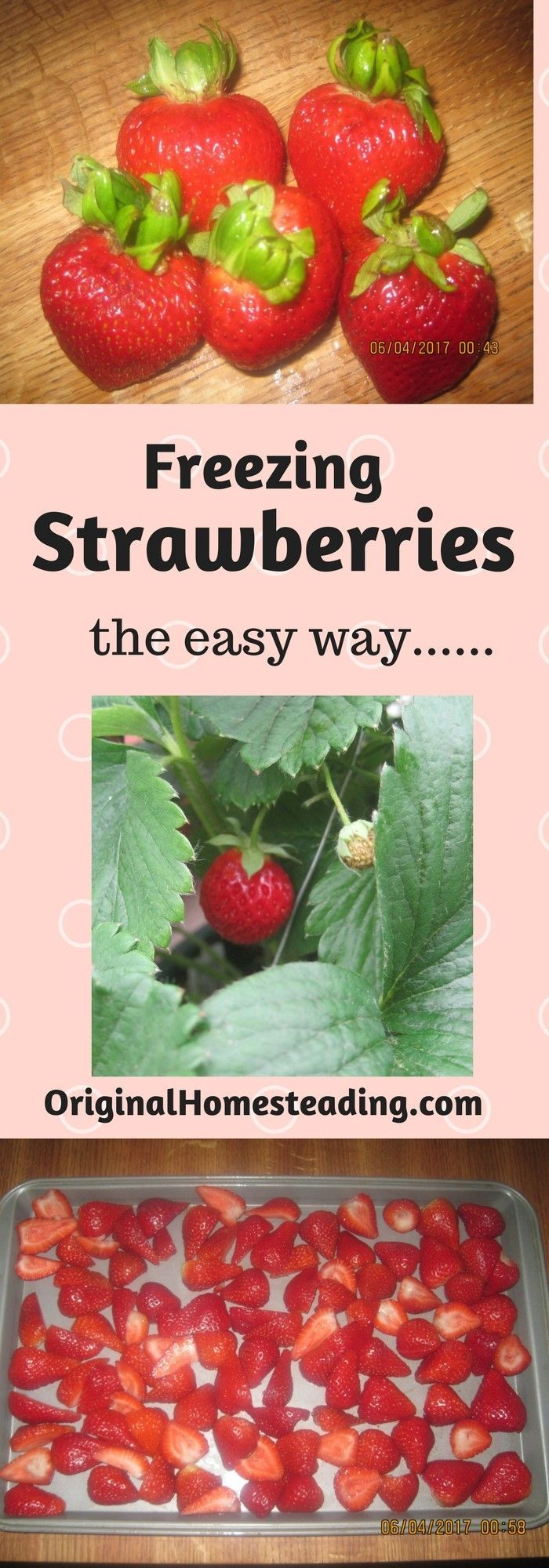 How to freeze strawberries for winter