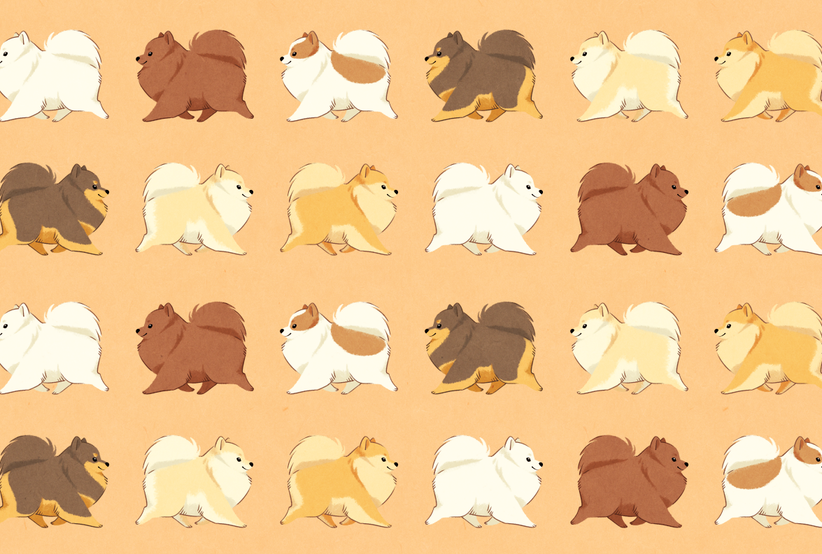 i choiced this illustration because it shows different types of pomeranian breeds.