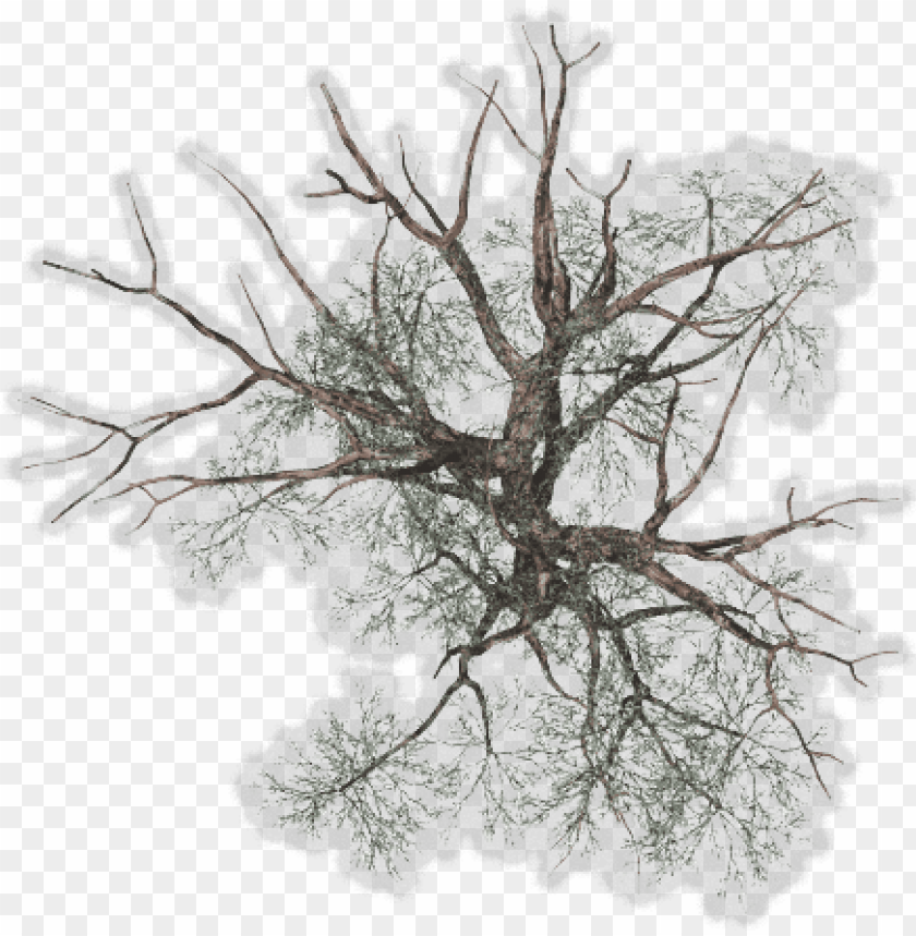 Tree Top View Png For Kids Winter Tree Plan Png Image With Transparent Background Png Free Png Images Tree Plan Png Trees Top View Tree Plan