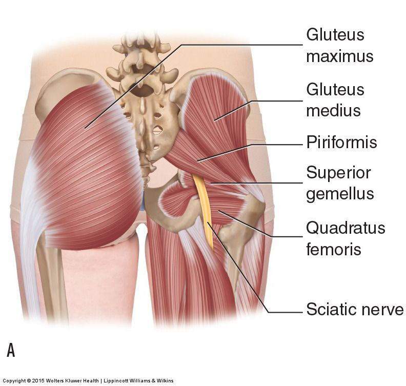 50++ Show me the sciatic nerve inspirations
