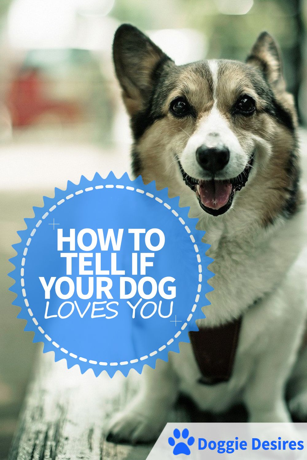 How to tell if your dog loves you dog love your dog dogs