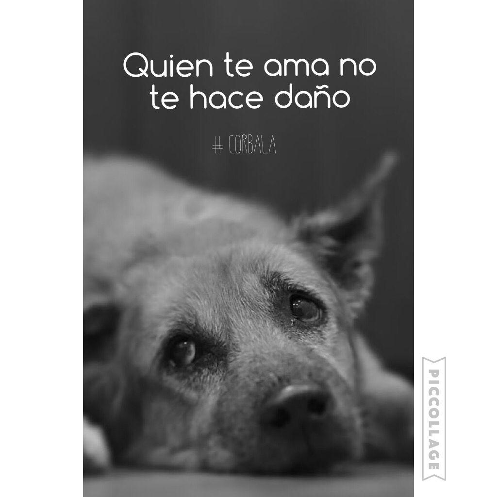 Quien te ama no te hace daño #corbala #piccollage @rana_hey @corbalilla
