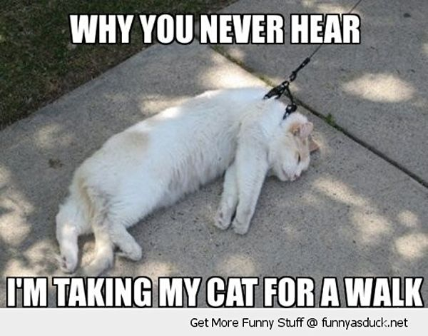 can you walk a cat on a leash maybe snappy pixels to make me smile funny cat pictures. Black Bedroom Furniture Sets. Home Design Ideas