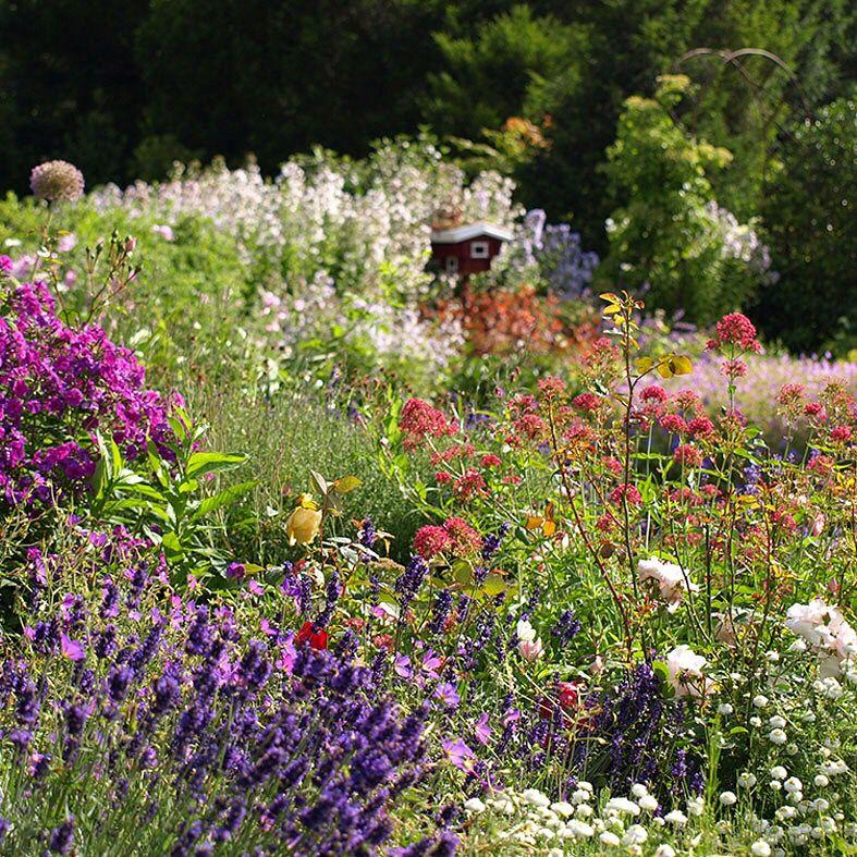garten garden natur blumen pflanzen bauerngarten blumen pflanzenwelt pinterest. Black Bedroom Furniture Sets. Home Design Ideas