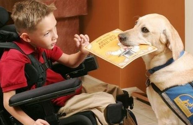 Canada Proposing Dog Driver S License To Stop False Service Dogs