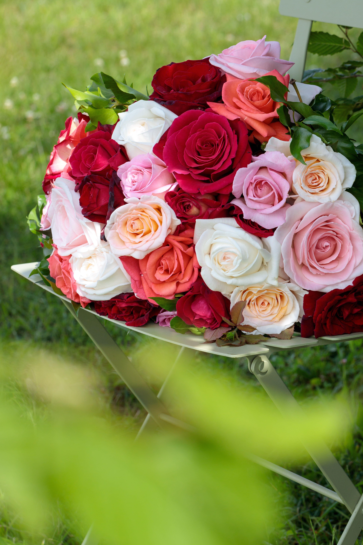 Faire Un Rosier Avec Une Rose Épinglé sur naturaleza