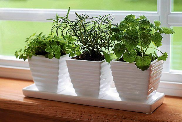 Jak Ozdobic Parapet Okienny Szukaj W Google Growing Herbs Indoors Herb Garden In Kitchen Growing Plants Indoors