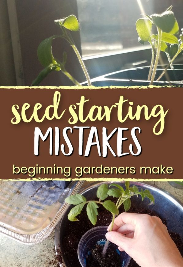 5 Seed Starting Mistakes Beginning Gardeners Make