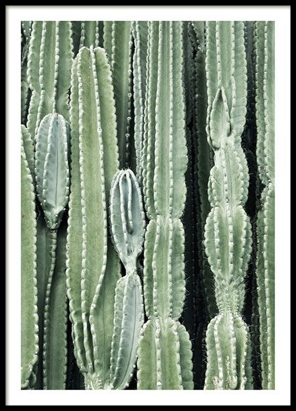 cactus flower ist ein herrliches botanisches poster mit der nahaufnahme eines gr nen kaktus. Black Bedroom Furniture Sets. Home Design Ideas