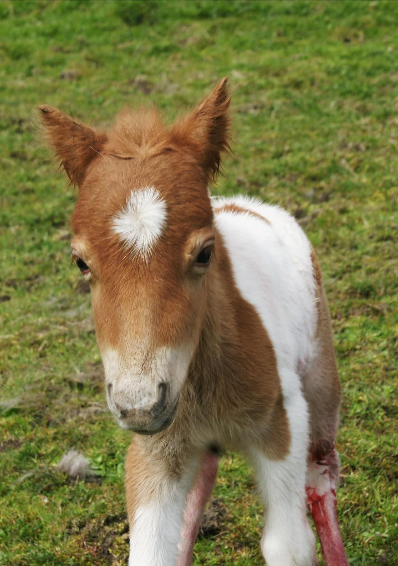 johnny's blog — brygarth Photos of Beth's new foal! The