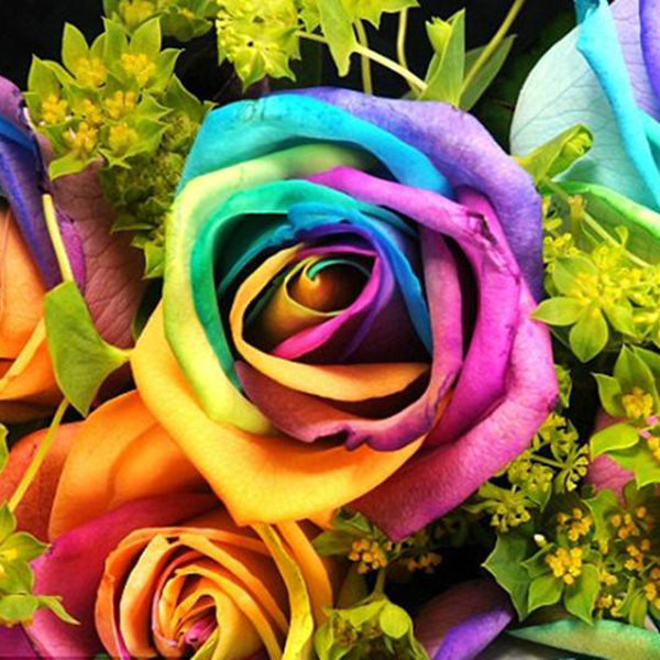 100pcs Rainbow Rose Magic Garden Seed Colorful Rose Flower Home Garden Bonsai Potted Ornamental Plants Rose Seeds Rare Flowers Rainbow Roses