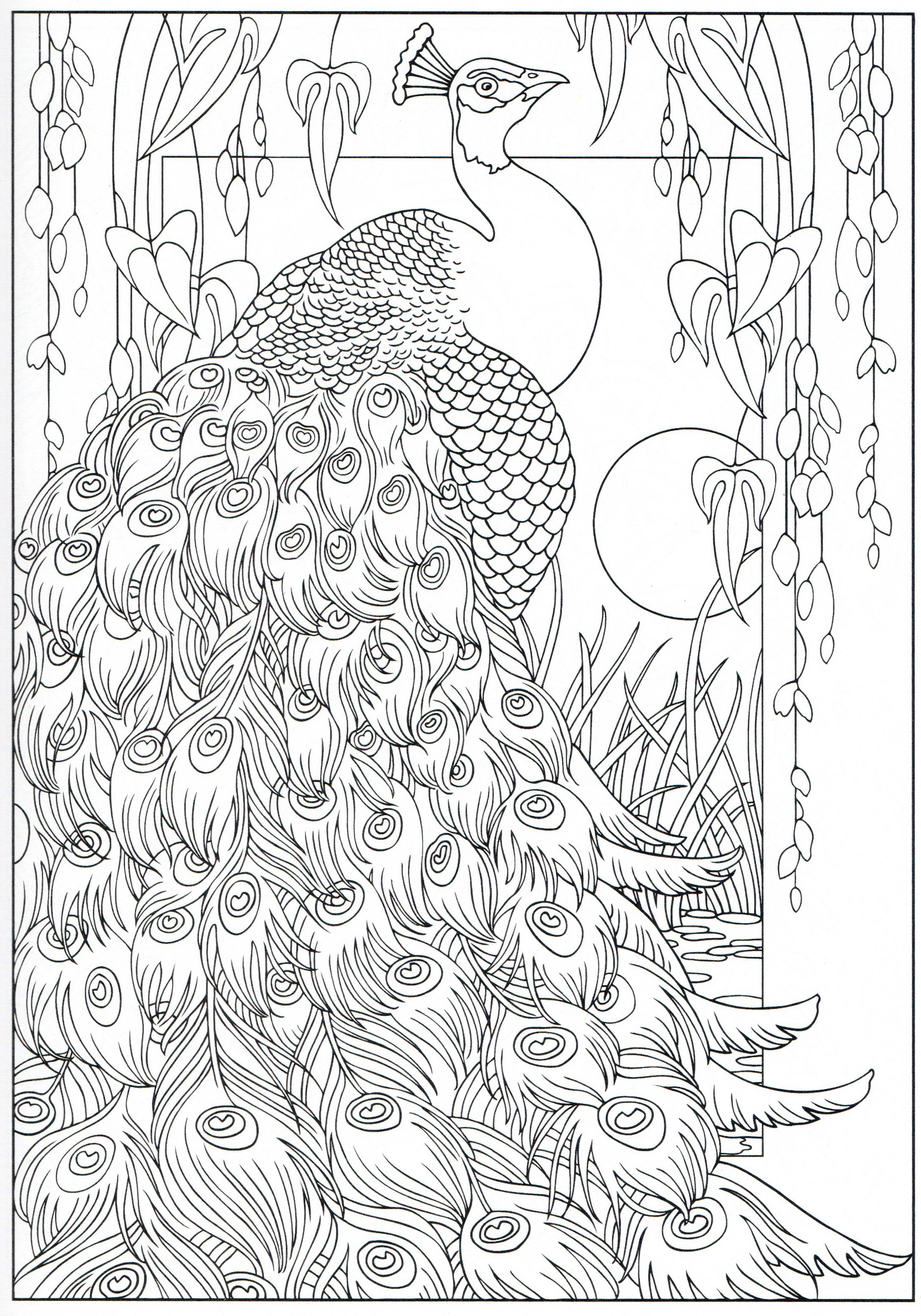 Peacock coloring page 1631 Color