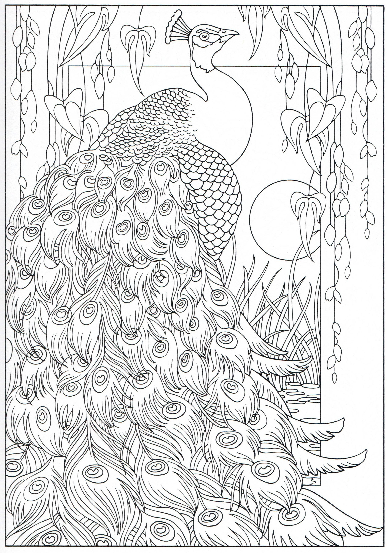 Peacock coloring page 16/31   Peacock coloring pages ...