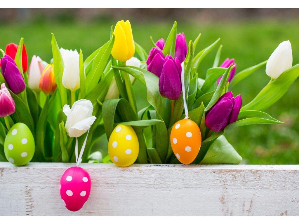 Easter Tulips (с изображениями) | Рождественские обои ...