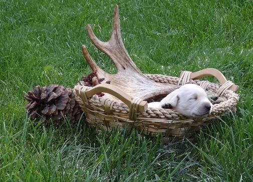 Or Train Your Rescued Dog To Be A Shed Hunting Master Montana