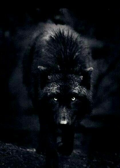 Pin by Bri on Wolves | Black wolf, Wolf, Animals