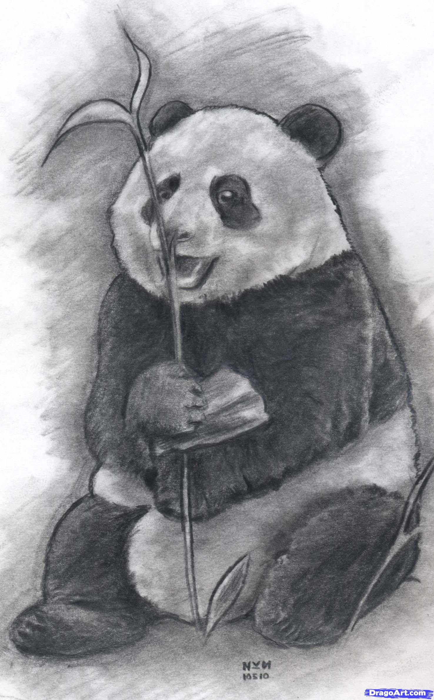How to draw a realistic panda draw real panda step by step