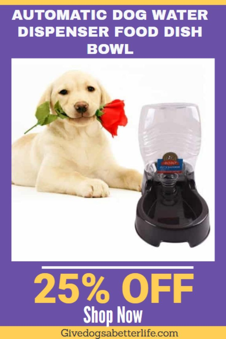 Automatic dog water dispenser food dish bowl dog water