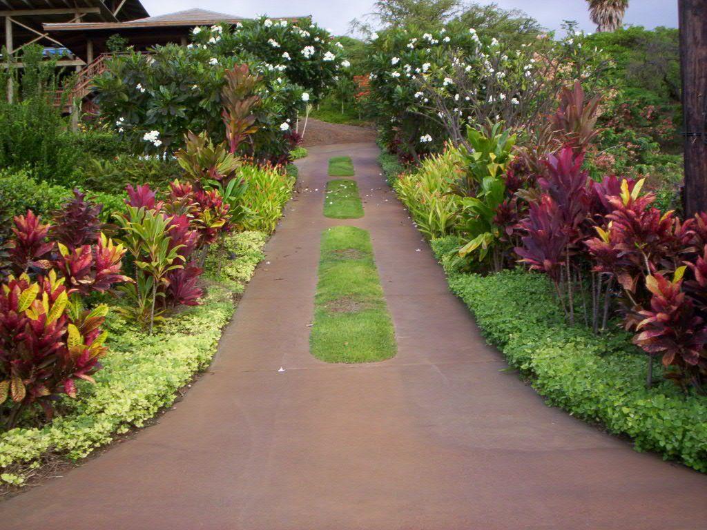 croton landscape ideas google search garden pinterest