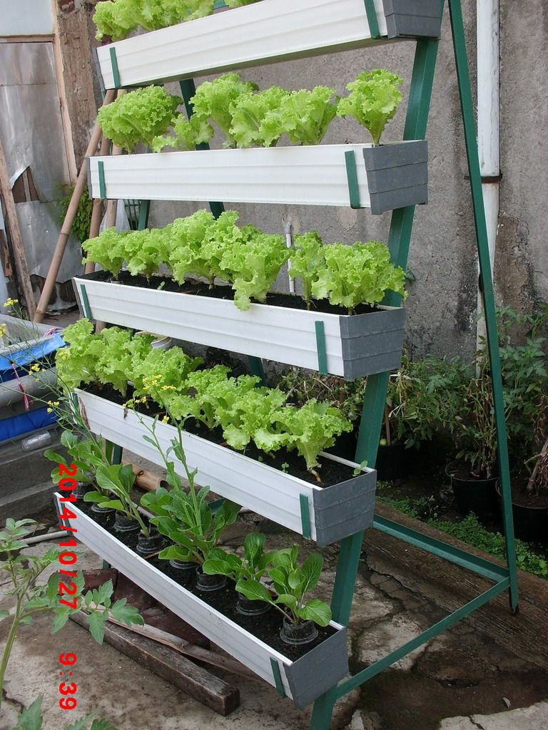 Pin by enru thea on Urban Farming RW04 Bandung Plants