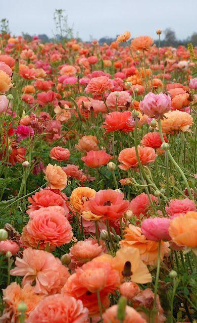 Découvrez les 15 fleurs à planter pour une jardinière d'été réussie. De quoi donner à votre jardin de belles couleurs ensoleillées !  (Crédit photo : Pinterest)