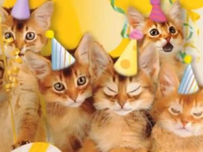 Cute cats sing happy birthday clip 034 min listen as these cute cats sing happy birthday clip 034 min listen bookmarktalkfo Images