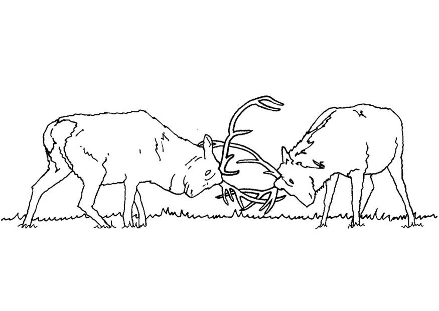 Elk-coloring-pictures-6 Free Coloring Page Site Wyatt - fresh realistic rhino coloring pages
