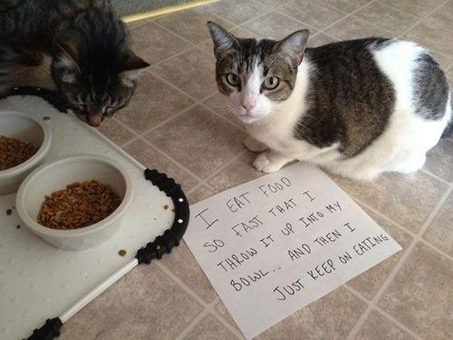 Agonizingstrugglesthatprovecatownersarethebestpeopleever - Hilarious cat owners struggles