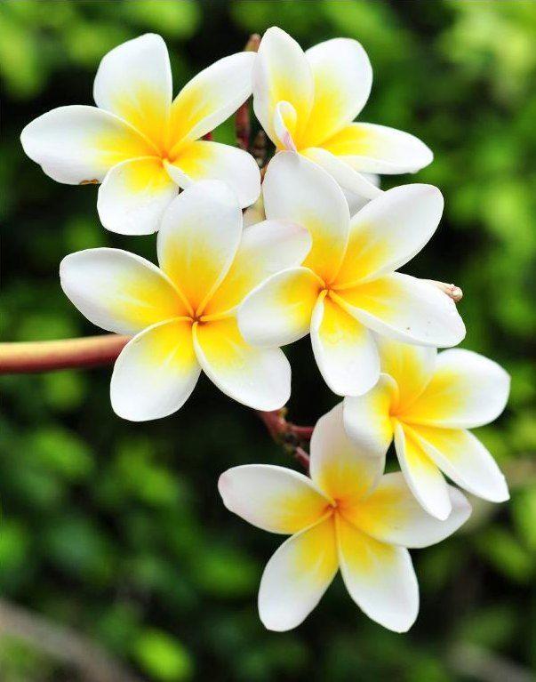 Pin On Ilham Flora