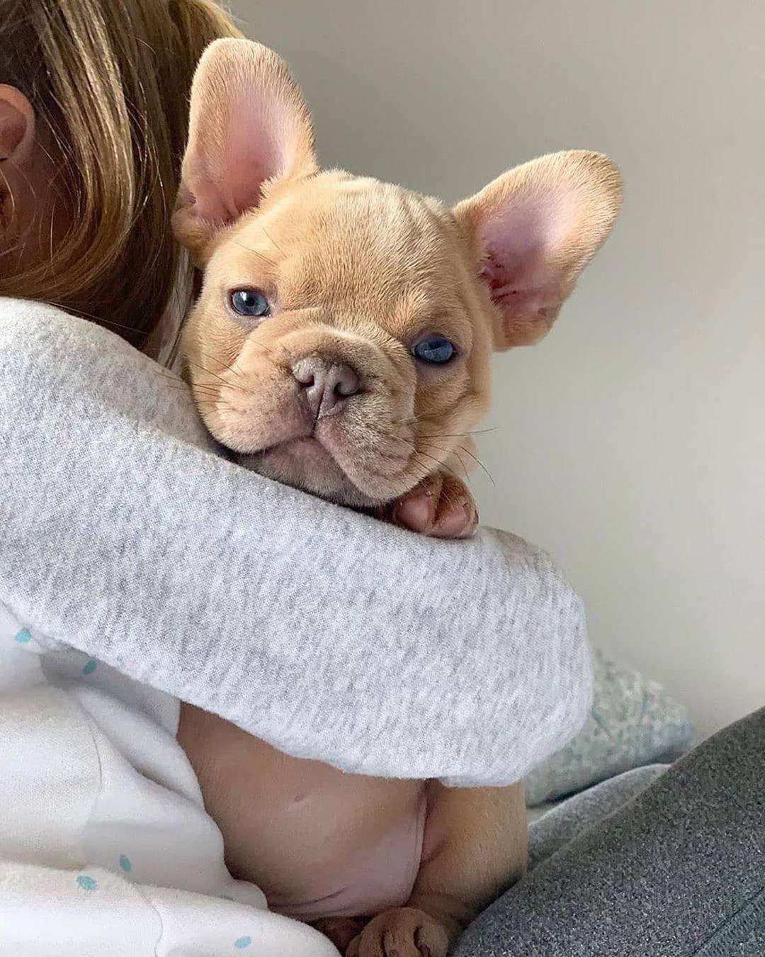 French Bulldog On Instagram Best Friends