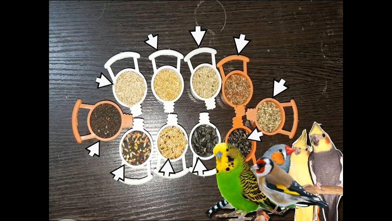 جميع أنواع البذور التي تأكلها طيور البادجي الزيبرا الكروان الفيشر والحسون