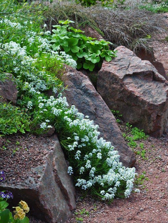 Three Dogs In A Garden The Rock Garden Part 3 Creative Ways To
