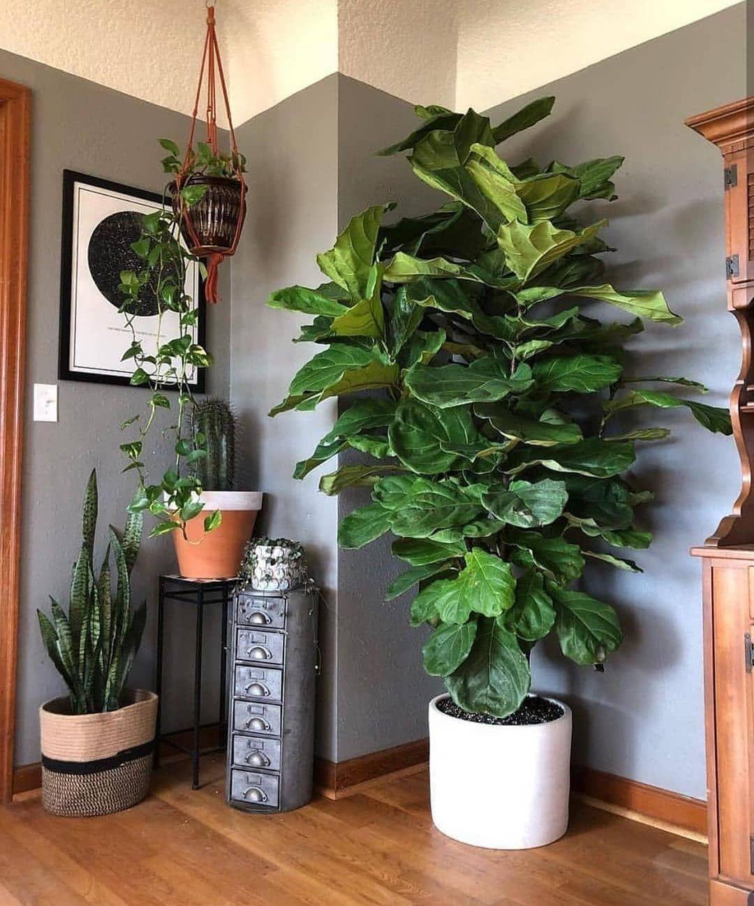 Boho Style Interior Decor Design | Diy plant stand, Fiddle ... on Amazing Plant Stand Ideas  id=88105