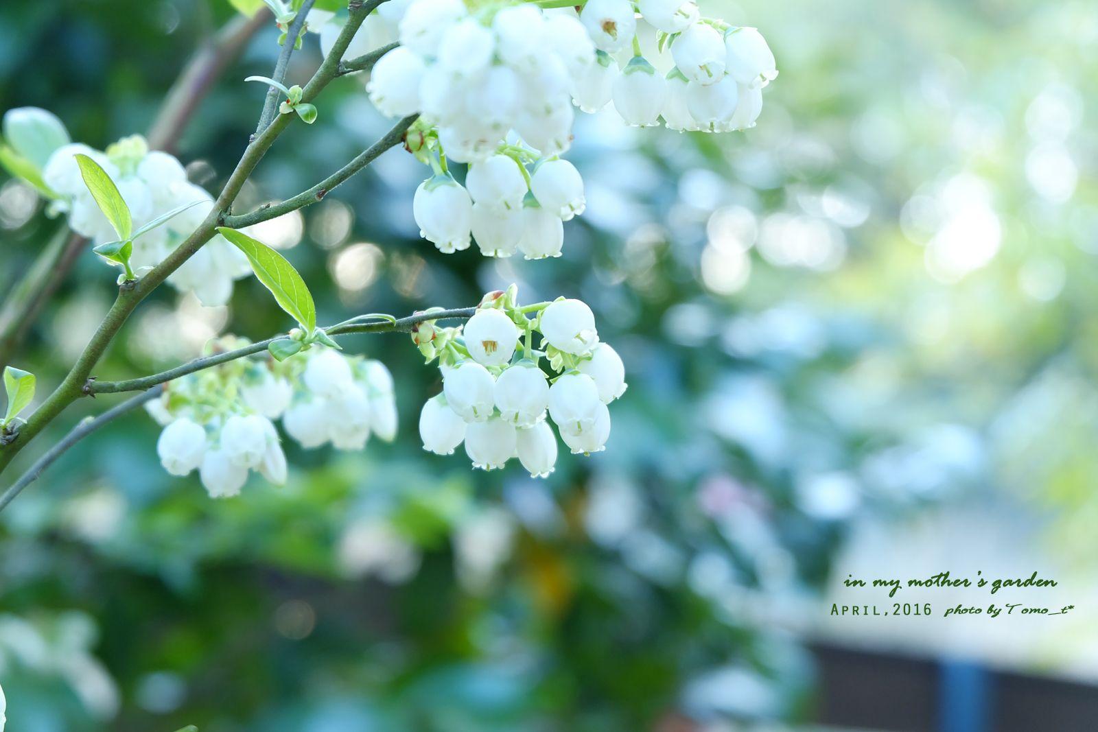 道のりを記憶に残して: 岡山の実家にて、初日に見たお花たち/花・グリーンのある暮らし