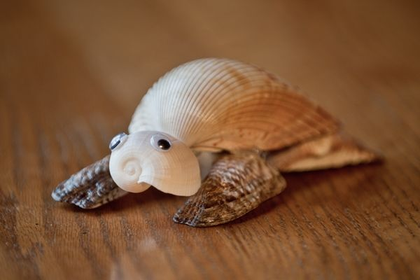 Turtle from cockle shell a fig shell for a head and for Animals made out of seashells