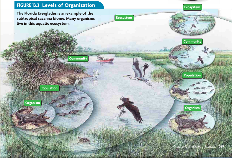 Ecosystems And Biomes Worksheets Worksheets for all | Download and ...