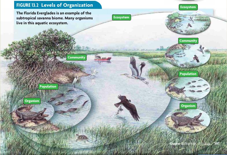 33++ Levels of ecological organization worksheet Education