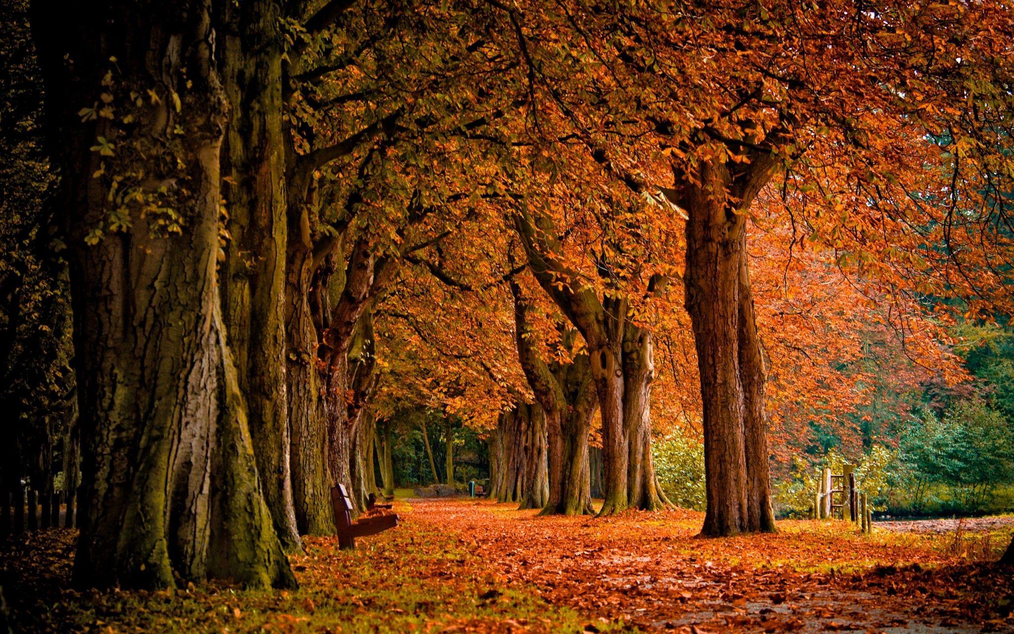 fall hd wallpapers 1080p high quality ololoshenka