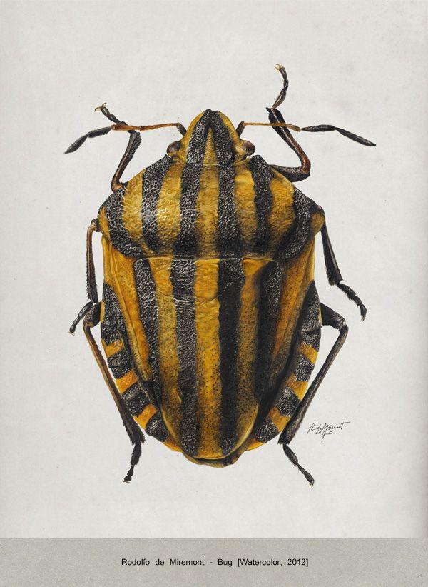 """Author: Rodolfo de Miremont Title: """"Bug"""" Technique: Watercolors on paper Sheet size: A3"""