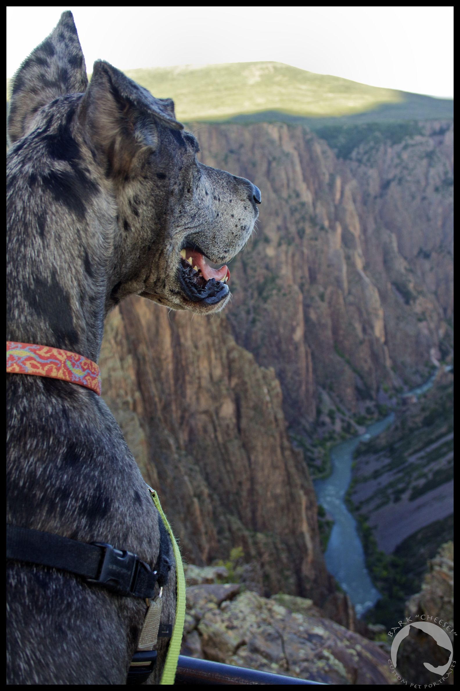 Black Canyon of the Gunnison National Park, pet